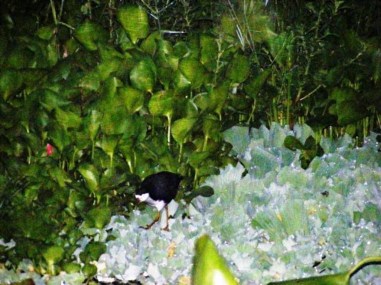 burung dan ecenggondok1
